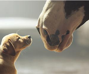 Top 10 des publicités préférées des américains durant le Super Bowl 2014 !