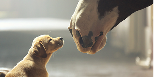 budweiser puppy clydesdales super bowl 2014