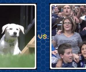 Les Whitecaps de Vancouver (MLS) et adidas lancent la «World Pup Predictor», concours de pronos entre les Fans et le chien Obi