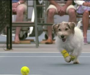 Le sponsor d'un tournoi de tennis invente les chiens ramasseurs de balles