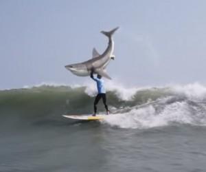 La mère du surfeur Mick Fanning amplifie le buzz autour de la publicité de KFC et de l'attaque de requin