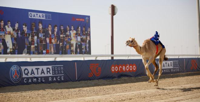 50 000€ offerts par Ooredoo après une course de dromadaires du PSG au Qatar