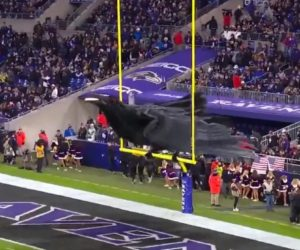 Fan Experience : Le corbeau des Ravens de Baltimore prend vie auM&T Bank Stadium