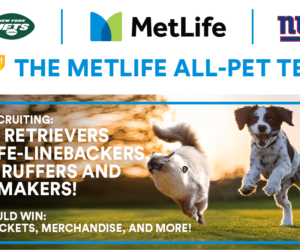 NFL – Un concours d'animaux de compagnie pour les New York Jets et les Giants au MetLife Stadium